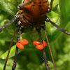 Parasitic Mites