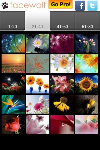 Flowers Wallpapers - screenshot
