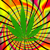 Marijuana Leaf Live Wallpaper