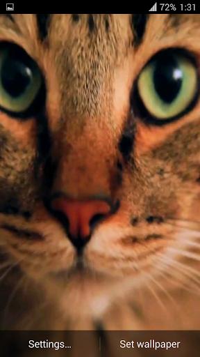 玩個人化App Wonderful Cat Live Wallpaper免費 APP試玩