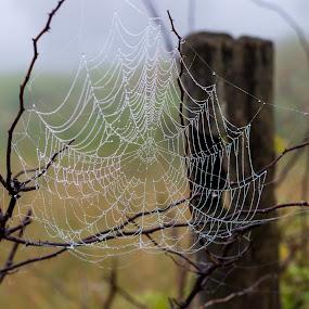 Web by Rick Shick - Uncategorized All Uncategorized