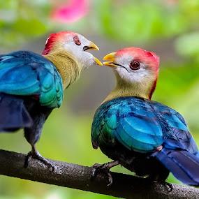 by Dawn Riddle - Animals Birds