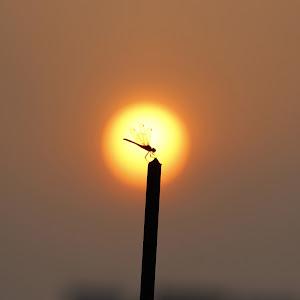 01_Urban Sunset_Matiu Rahman Shagor_01911477008.jpg