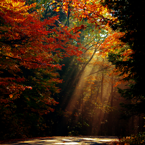 Fall is Approaching by Janet Lyle - Landscapes Forests ( autumn, foliage, fall )