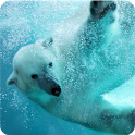 White Bear live wallpaper icon