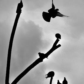 BIRD by Baha mustafa BARAN - Black & White Animals ( bird, animals, b&w, d90, silhouette, baha, nikon, turket, black )