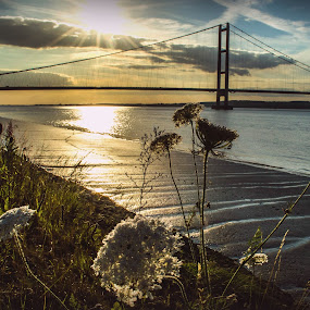 Bridge and flowers by Nicole Williams - Novices Only Landscapes ( flowers bridge sunset humber )