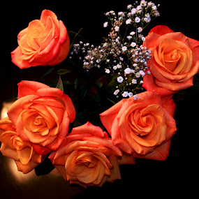 Coral Roses by Rhonda Silverton - Flowers Flower Arangements ( bouquet, rose, coral, baby's breath, roses, flowers, flower,  )