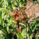 Flame Skimmer[Female]