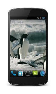 Penguins Free Video Wallpaper- screenshot thumbnail