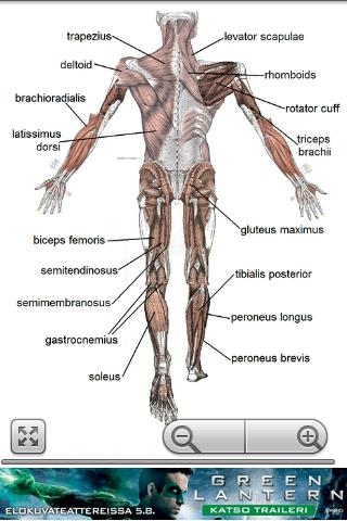 Human Anatomy- screenshot