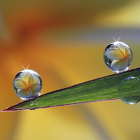 :: Not Alone :: by Dedy Haryanto - Nature Up Close Natural Waterdrops (  )