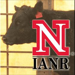 Udder & Teat Scoring Beef Cows