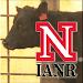 Udder & Teat Scoring Beef Cows Icon