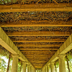 Trumpet Vines by Stephanie Turner - Buildings & Architecture Other Exteriors ( patterns, nature, arch, nature photography, architectural detail, architecture, repeat, flower,  )