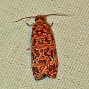 Labyrinth Moth