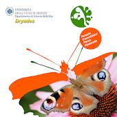 Farfalle Foreste Casentinesi