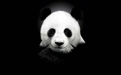 【免費工具App】Cute Panda Wallpaper-APP點子