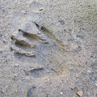 Huellas desconocidas (Unknown footprints)
