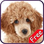 Poodle+ Free