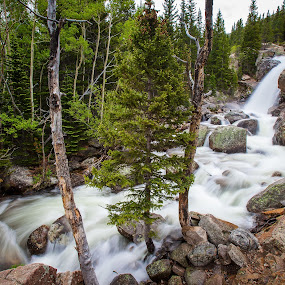 Alberta Falls, Rocky Mountain National Park by David Andrus - Landscapes Waterscapes ( waterfalls, alberta falls, waterfall, rocky mountain national park, river )