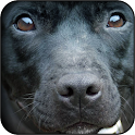 Black dogs wallpapers icon