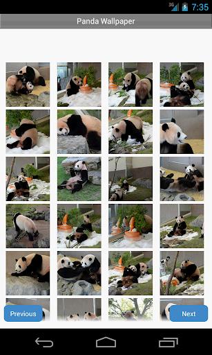 パンダの壁紙