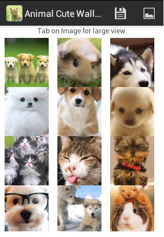 Animal Cute Wallpaper