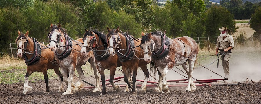 the team by Gary Parnell - Animals Horses ( gulf station )