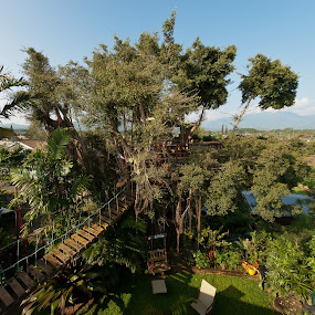My bird nest by GUILLAUME FUNFROCK - Buildings & Architecture Bridges & Suspended Structures ( wood, tree, house, bridge, hawaii )