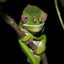 Furcifer chameleon