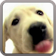 DOG SCREEN .. file APK for Gaming PC/PS3/PS4 Smart TV