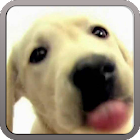 DOG SCREEN CLEANER LWP FREE icon