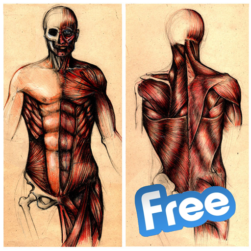 Human Anatomy Learning
