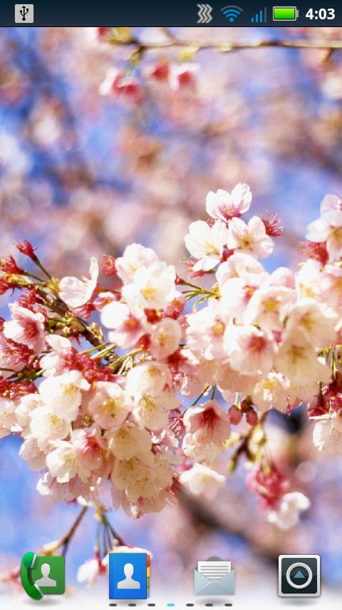 Cherry Blossoms Wallpaper - screenshot