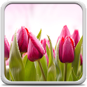 Tulips Live Wallpaper icon
