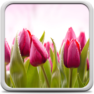 tulips live wallpaper creative factory wallpapers june 5 2014 ...