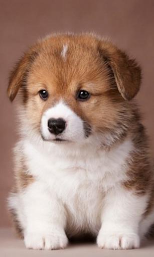Lindo Cachorro