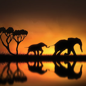 Holding On by Jennifer Woodward - Digital Art Animals ( water, animals, elephant, wildlife, reflections, landscape, dusk, dawn, nature, sunset, gold, sunrise, golden,  )