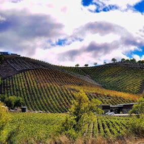Paso Robles Winery by Dorothy Valine Gram - Uncategorized All Uncategorized
