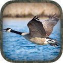 Goose Hunting Calls icon