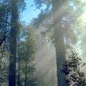 Redwoods Live Wallpaper icon