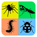 Insects Life Cycle Free icon