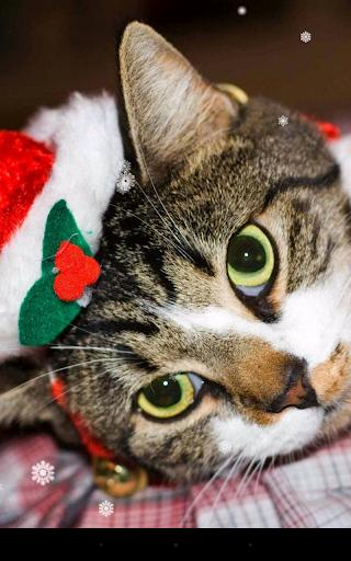 mod Christmas Cat Live Wallpaper 2.8.1 screenshots 3