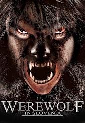 A Werewolf in Slovenia