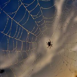 by Slavko Marčac - Nature Up Close Webs