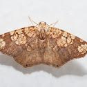 Filament-bearer Moth