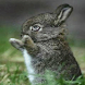 Playful Bunny Live Wallpaper