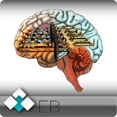 Higher Brain Function Hypnosis
