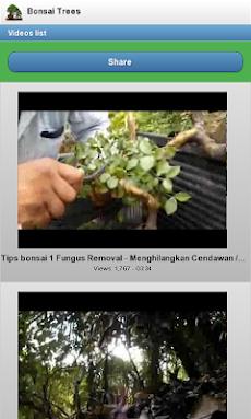 盆栽の木のおすすめ画像2
